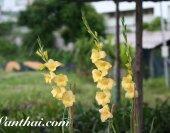wt-glad-yellow-01-jpg