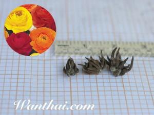 หัว Ranunculus